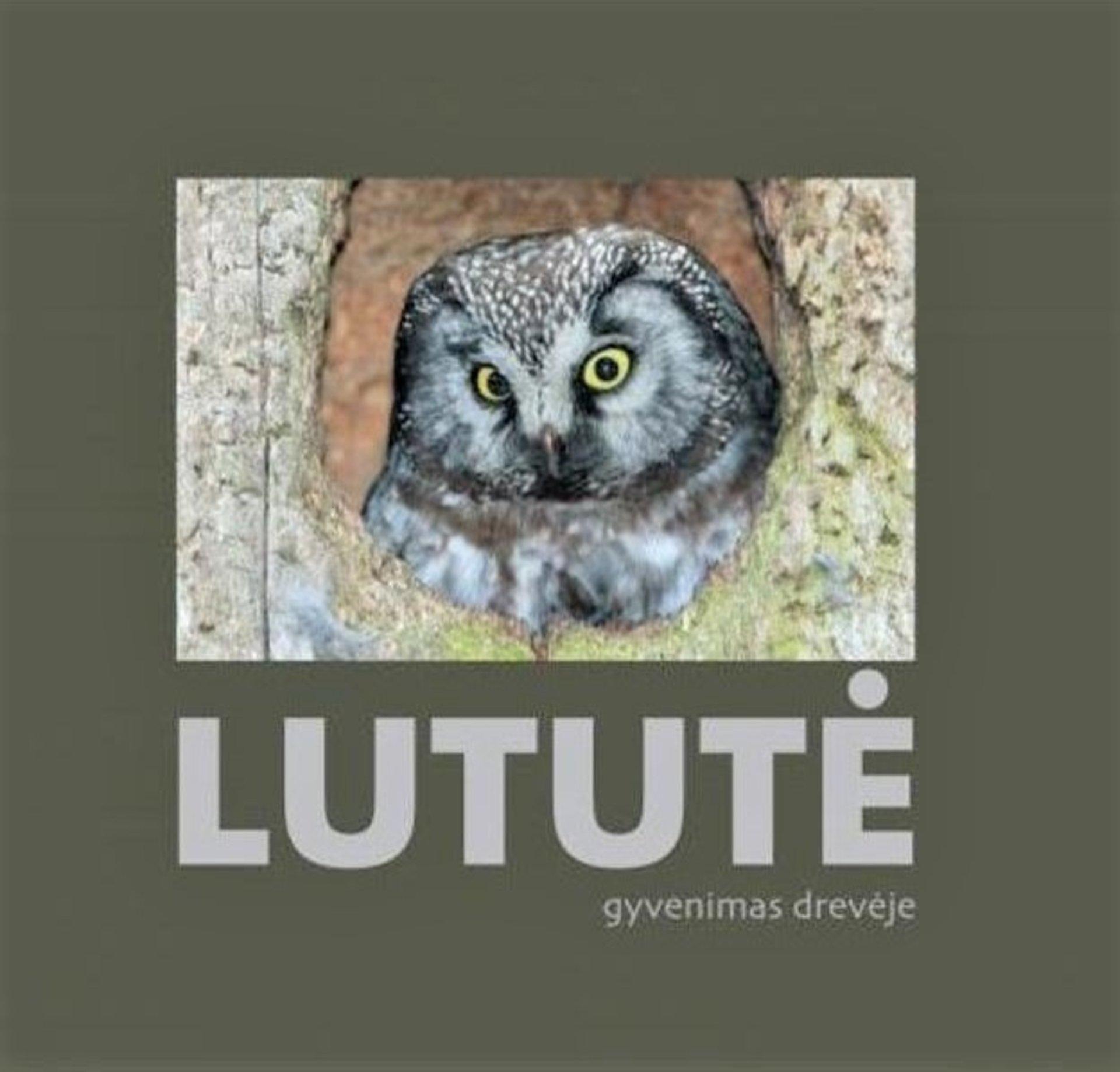 Lututė
