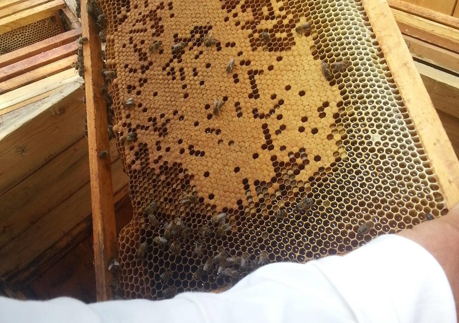 """Izglītības programma """"Priecīgs biškopība"""""""