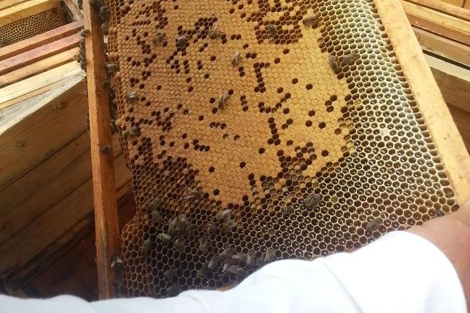 "Educational program ""Cheerful beekeeping"""