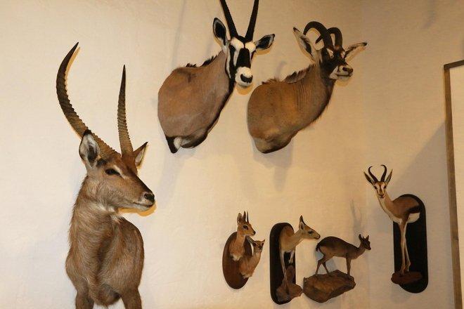 Gamtos muziejus Ažvinčiuose
