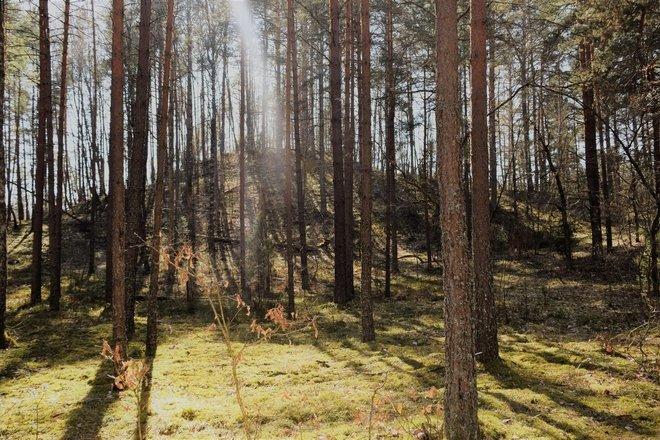 Puziniškio piliakalnis